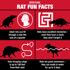 Rodent Trapping Tip - Rat Fun Facts